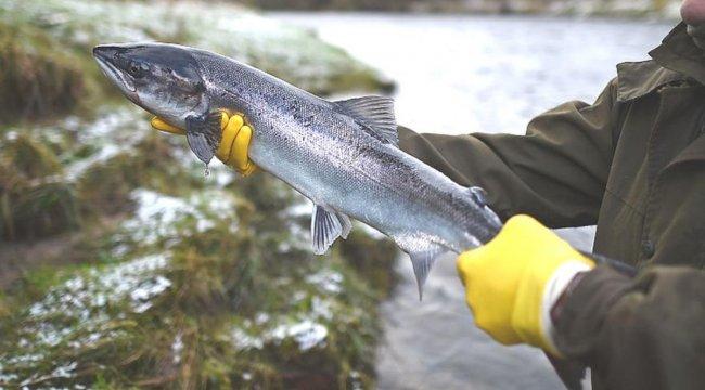 Çevre kuruluşlarına göre tatlı su balıklarının üçte biri yok olma tehdidi altında